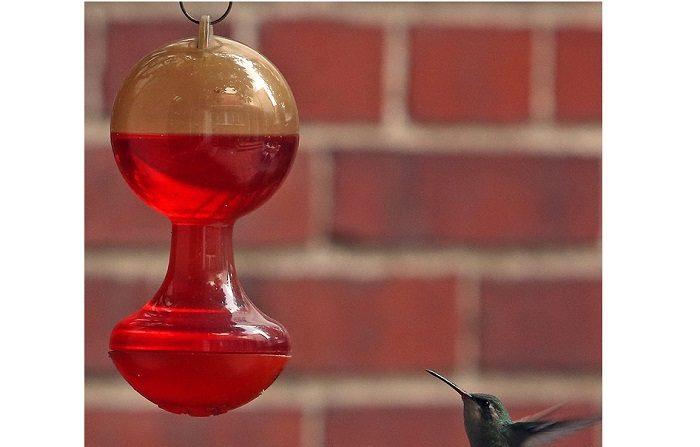 El colibrí, una ave amenazada y convertida en amuleto en nombre del amor. Fotografía fechada el 13 de agosto de 2018, muestra un ejemplar de colibrí mientras vuela, en Ciudad de México (México). EFE