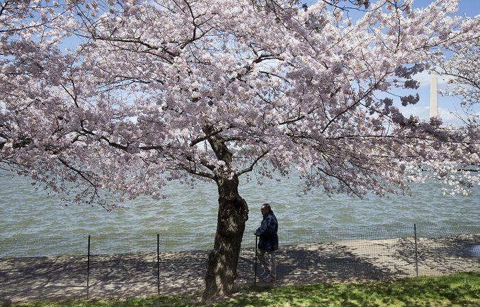 El adelanto de primavera fue irregular en rutas migratorias de América del Norte