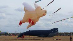 """""""Cuando los cerdos vuelan"""": el cielo se vistió de gigantes y divertidos cometas en esta ciudad de Alemania"""