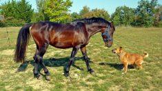 Un adorable perro se hace amigo de un caballo desnutrido y lo ayuda en su recuperación