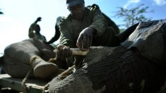 Encuentran 87 elefantes acribillados en la
