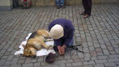 Utilizan perros drogados para pedir limosna: denuncian evolución de las mafias de la mendicidad