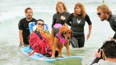 Este asombroso perro surfea para sanar los corazones y almas de niños con necesidades especiales