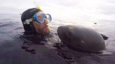 Este cariñoso león marino insiste en besar al buzo frente a la cámara