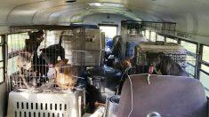 64 animales fueron evacuandos del camino del huracán Florence por un camión amante de los animales