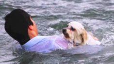 Estaba a punto de tirar las cenizas de su abuela al mar cuando saltó al agua para salvar a un perro