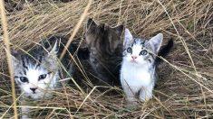 10 lindos gatitos sin hogar siguen durante un kilómetro a una mujer en su camino a casa