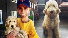 Empleados y perros felices: empresa da a sus trabajadores semana de licencia por adopción de mascotas