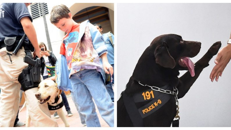 Niños abusados toman valor para testificar en contra de sus atacantes gracias a estos perritos