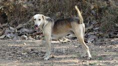 Esta es la aldea india donde los perros abandonados se convierten en millonarios