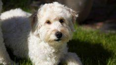 En una tragedia su mamá murió y su perro desapareció, pero un buen hombre le devuelve la esperanza