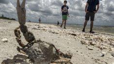 Cierran playas de Miami ante la presencia confirmada de la marea roja