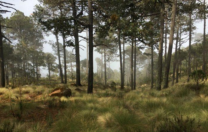 Imagen de archivo de un bosque. EFE/STR