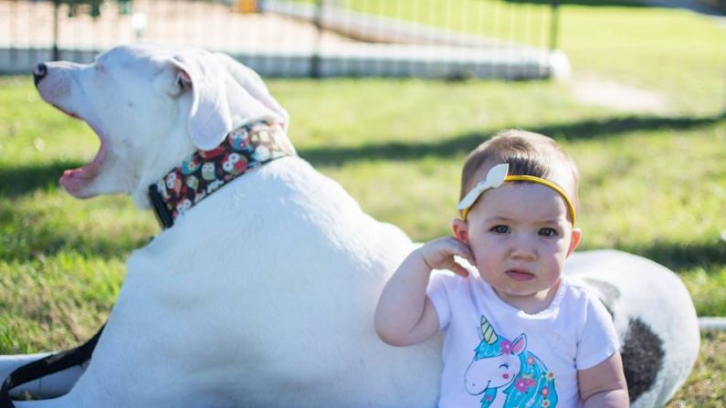 Esta familia rescató a una perra sorda y ciega, ahora es una leal guardiana de su pequeña hija