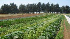 Agroecología tiene proyectos viables en México, Nicaragua, Cuba y España, según estudio
