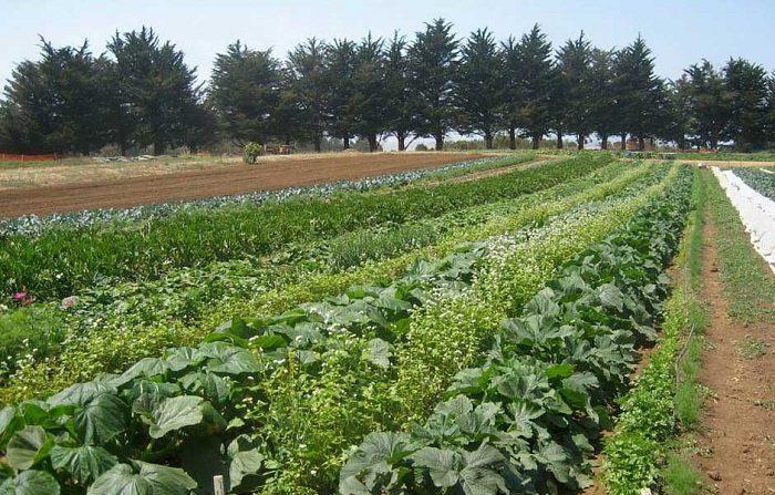 Agroecología CERAI.org Wikipedia