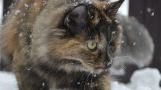 Con nieve y frió de -18° C, joven de buen corazón se detiene a salvar a esta bola de pelos congelada