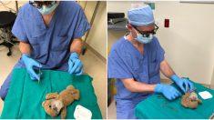 """Amable doctor """"opera"""" osito de peluche para que su paciente de 8 años ingrese tranquilo a cirugía"""