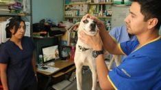 A pesar de su amor por las mascotas, México tiene el mayor número de perros callejeros de América Latina
