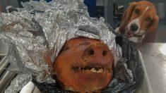 Perro detectó un cerdo asado que ecuatoriano intentó pasar por aeropuerto en EE. UU.