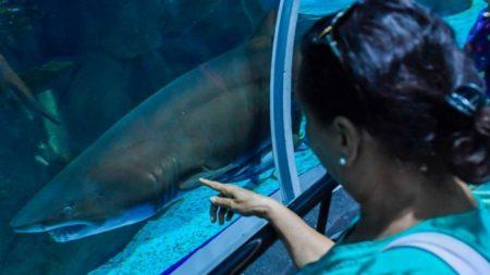 Mujer tropieza y cae en estanque repleto de tiburones justo cuando los iban a alimentar