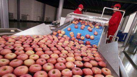 Una empresa china de jugos utiliza manzanas podridas para sus productos de exportación, según la prensa china