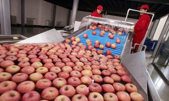 Trabajadoras en una línea de producción en un centro de distribución de fruta en las afueras de Beijing, China, el 28 de diciembre de 2006. (China Photos/Getty Images)