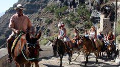 Contra el maltrato animal Grecia limita el peso de carga de burros en Santorini