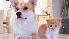 Perrita sufre la pérdida de sus 7 cachorros pero esta pequeña bola de pelos le devuelve la alegría