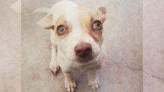 Perrito adicto a las drogas pasa por cuatro meses de rehabilitación y encuentra un cálido hogar