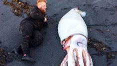 Estaban listos para bucear cuando encuentran un monstruoso calamar de más de 4 metros de largo