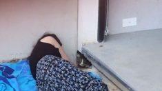 Su gato desaparece y luego su vecino oye maullidos debajo del concreto, ¡la curiosidad casi lo mata!