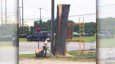 Este árbol de 100 años de edad se salva del hacha gracias a la motosierra de un genial artista
