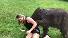 Esta afortunada turista está cumpliendo el sueño de muchos ¡rodar en el suelo con un elefante bebé!