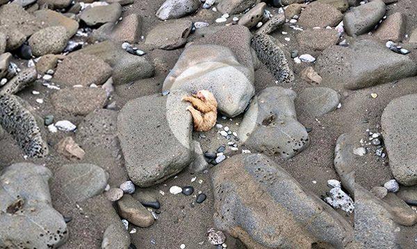 Rescatan a un perezoso flaco y malherido ¡y ahora parece un adorable osito de peluche!