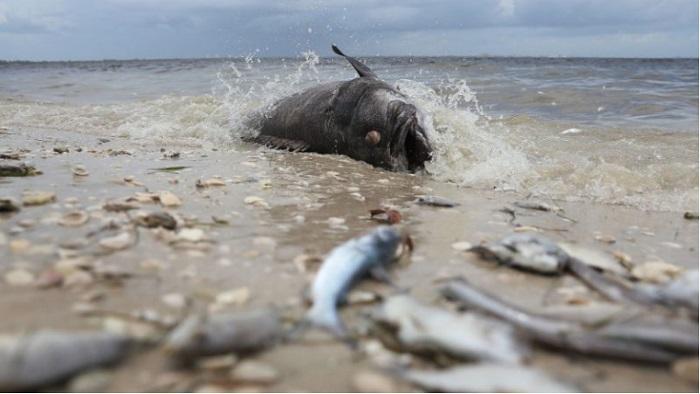 Sanibel, Florida. en agosto de 2018. (Joe Raedle/Getty Images)