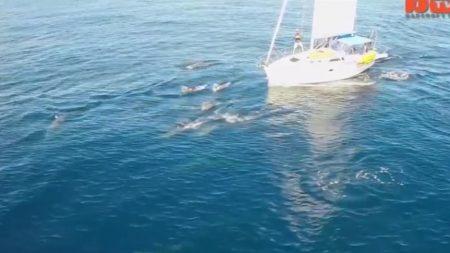 Delfines juguetones filmados desde un dron acompañan a un barco en las costas de California