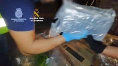 Más de 6 toneladas de cocaína entre racimos de bananos descubren en España