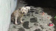 Con habilidad y dulzura, estos rescatistas sacan a dos perritos de una sucia alcantarilla