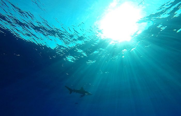 Un hombre de 33 años murió tras ser atacado por un tiburón en las islas Whitsundays, en el noreste de Australia, y se convierte en la tercera víctima desde septiembre en esa misma zona. EFE/Archivo
