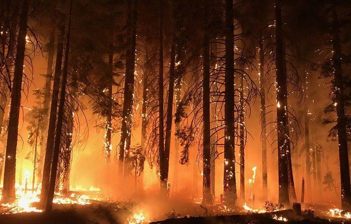 Fotografía cedida por el Servicio Forestal Estadounidense (USFS) y el Grupo de Coordinación Nacional de Incendios que muestra a un grupo de bomberos mientras combaten las llamas en el incendio de Camp Fire, California. EFE/Usfs/nwcg
