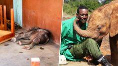 Bebé elefante rescatado de un ataque vengativo agradece a sus cuidadores de la forma más dulce