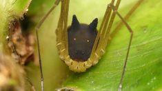Captan insólita araña con cabeza de perro