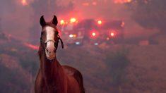 La otra cara de la tragedia: rescatan miles de animales atrapados en incendios de California