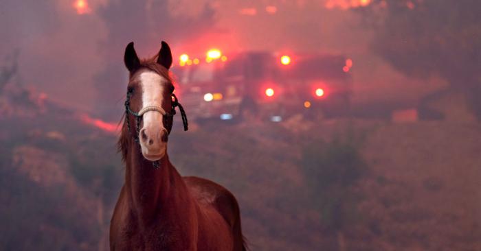 Los caballos se asustan cuando el incendio Woolsey avanza a través de una propiedad cerca de Paramount Ranch, el 9 de noviembre de 2018, en Agoura Hills, California. (Foto de Matthew Simmons/Getty Images)