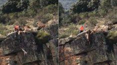Video muestra una cacería al borde de un precipicio que acaba con varios perros despeñados