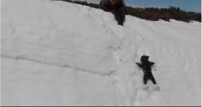 """No es lo que parecía: la dramática verdad detrás del """"inspirador"""" video de un oso bebé y su madre"""