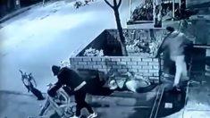 Perro callejero se transforma en un héroe al detener brutal golpiza y asalto