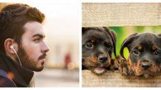 Este viajero encuentra 2 cachorros abandonados en la carretera y ahora son un trío de aventureros