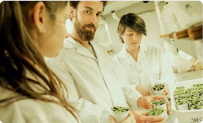Científicos descubren cómo hacer plantas más resistentes a sequías